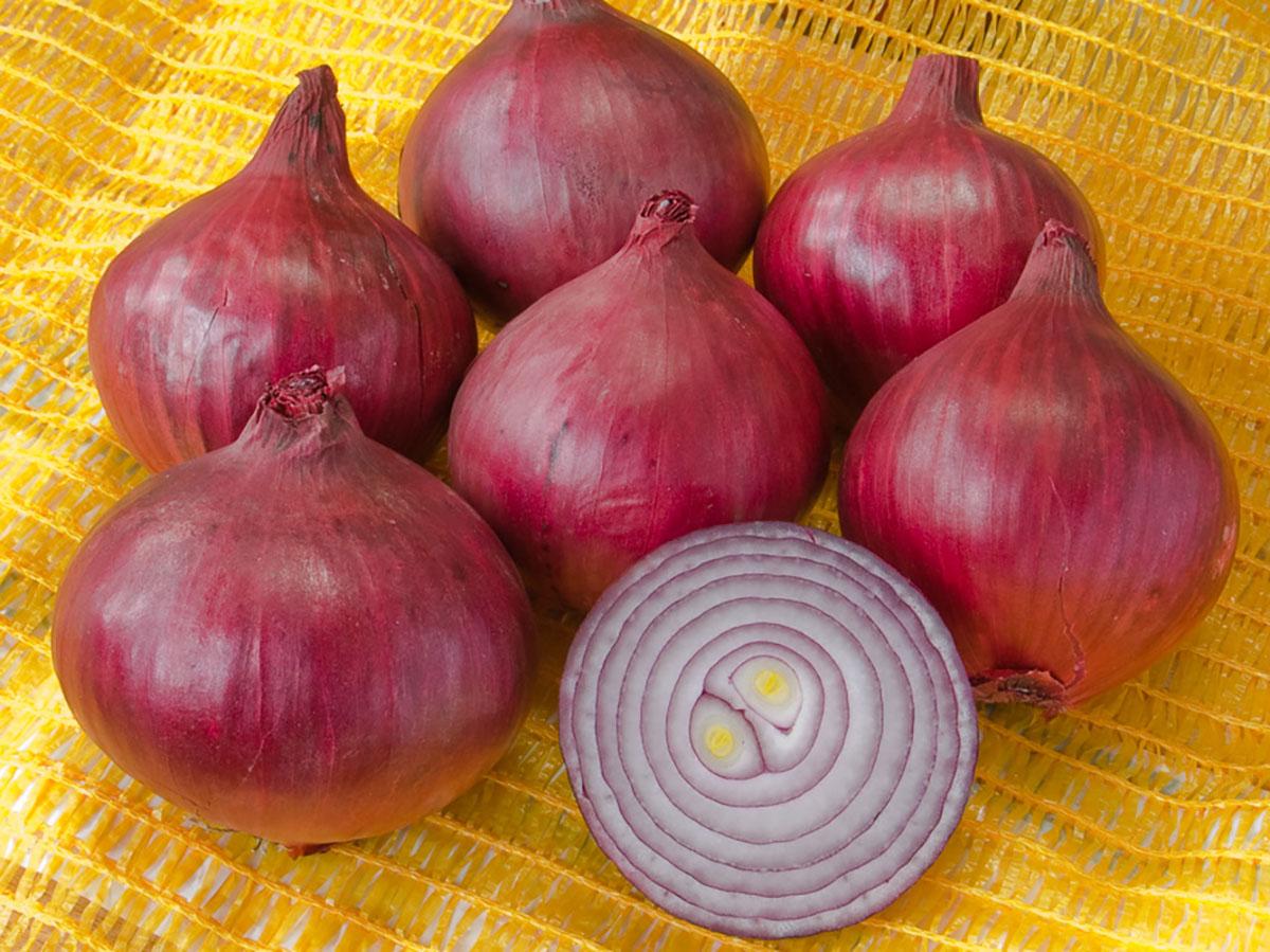 Zwiebel-rot-robelja-bio-jungpflanzen-online-bestellen