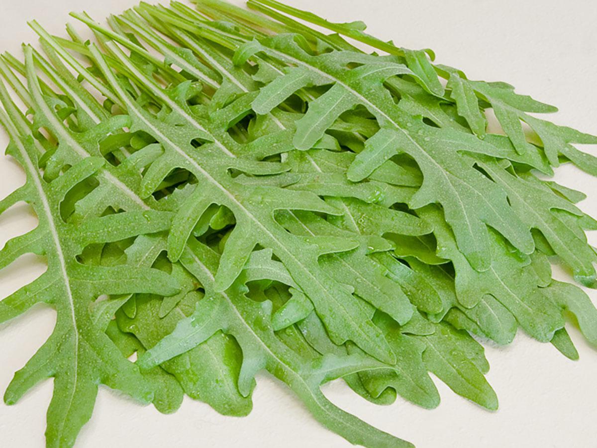 Wilde-Rauke-Rucola-Rukola-Jungpflanzen-online-kaufen-bio