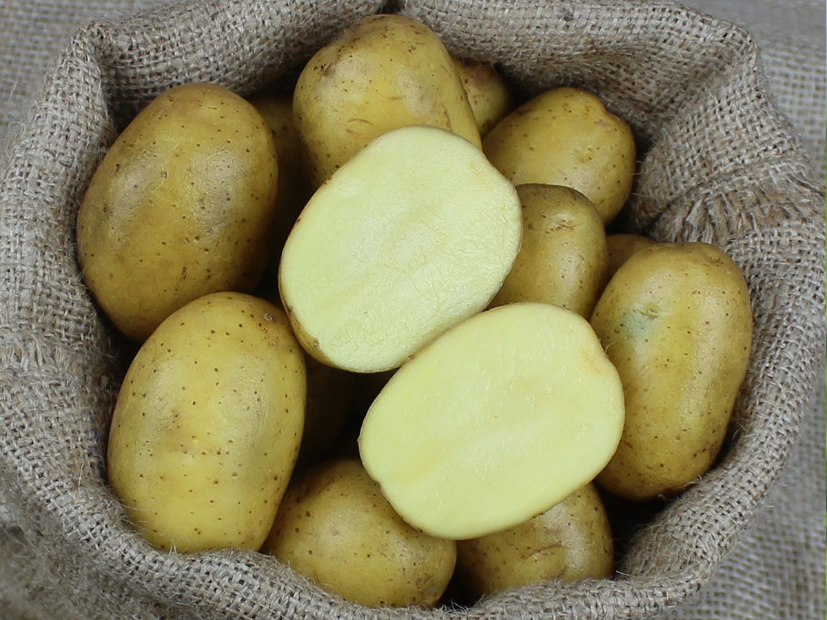 Gunda_bio-pflanzkartoffel_hof-eggers_kartoffel